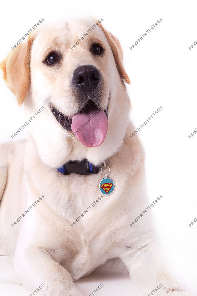 Superdog Light Blue (Red S) Pet Tag - Pawprint Pet Tags