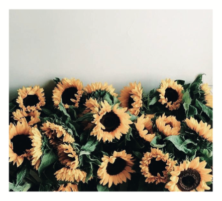 Botanical Hand + Body Wash || Sunflowers