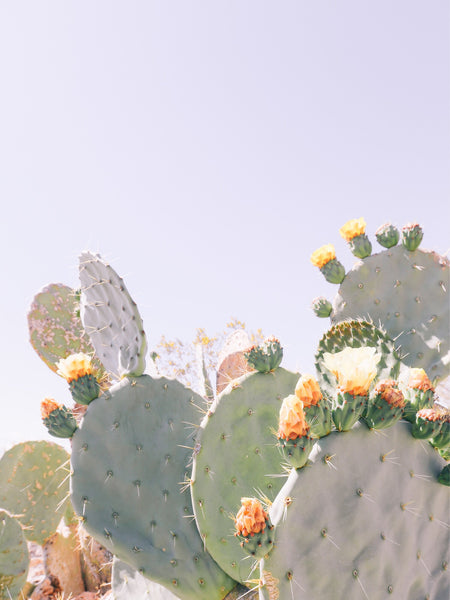 You're some kind of wonderful Candle // Joshua Tree Flowering Cactus