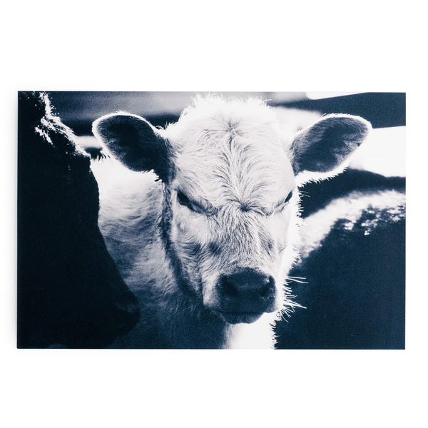"""Mad Calf"" Photo Print"