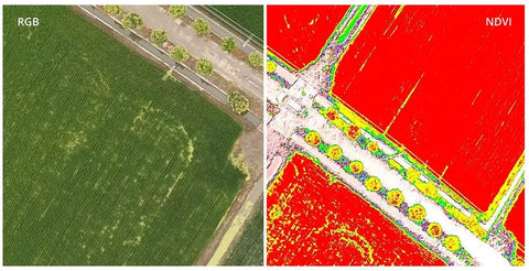 dji phantom 4 multispectral rgb and ndvi feed