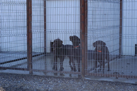 OK Brand 8ga 6'x12' galvanized Kennel Panel Dogs