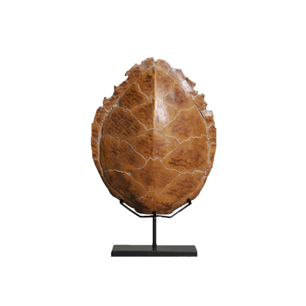 Turtle Carapace Moulding - Large