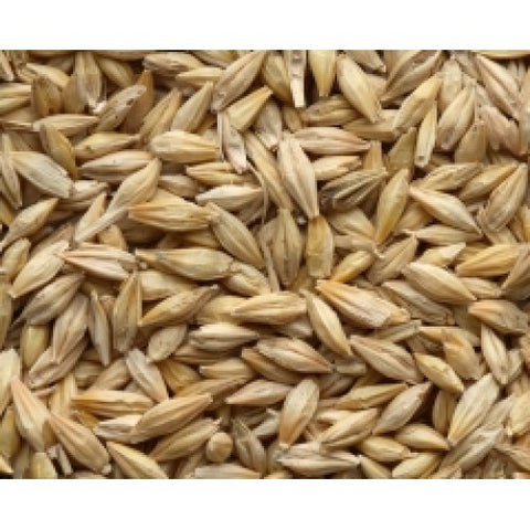 Whole Barley