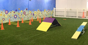 Agility (July 19 - Wednesday - 1 Session)