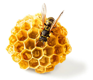 bee sitting on golden honeycomb