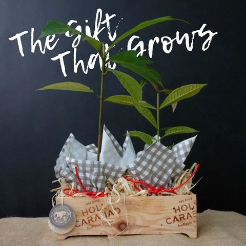 The Gift That Grows (Plan-a-Tree Kit)