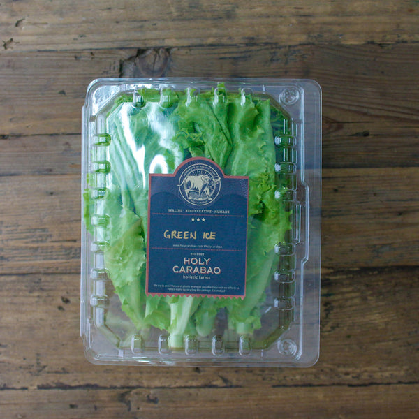 Green Ice Lettuce 200g per pack