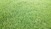 5kg All Season Kikuyu Blend - turfmate
