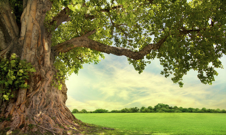 4 Surprising Things Trees Do For You