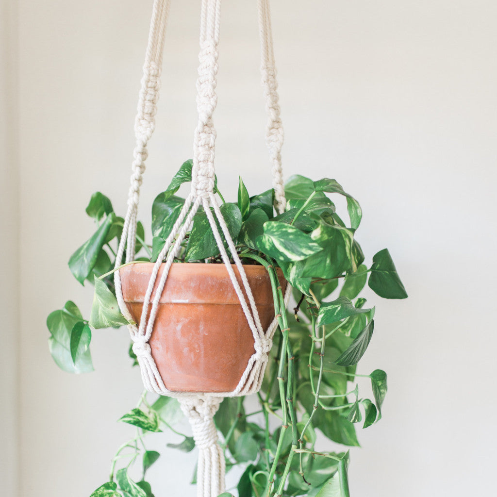 Cotton Macrame Plant Hanger Sugarhouse Supply Company