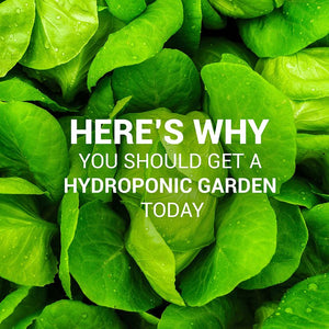 Here's why you should get a Smart Hydroponic Garden Today