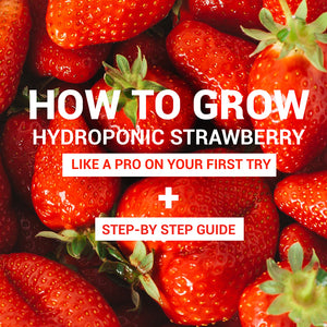 Hydroponic Strawberry: Essential Guide to Get Started right Away like a Pro - even if it's Your First Time