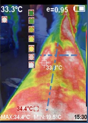 Thermal image of leg from PerfectPrime thermal camera