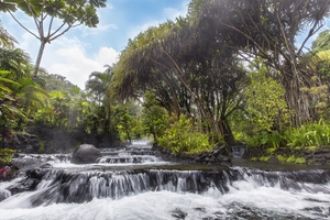 Banner image of river flowing down with trees in background
