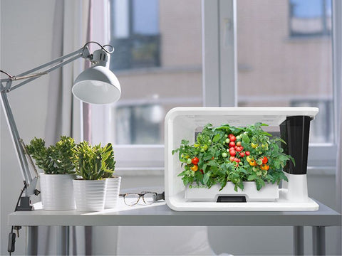 PerfectPrime Aspara Nature smart grower on a desk with vegetables growing