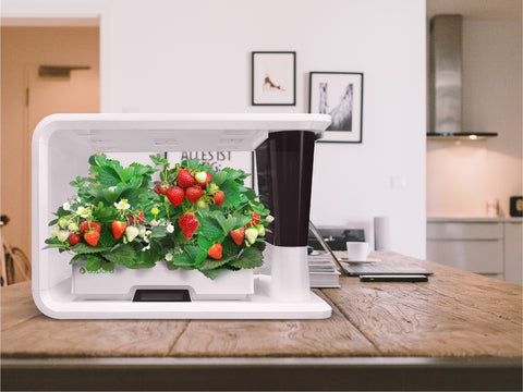 PerfectPrime aspara Nature Smart hydroponic grower on kitchen top