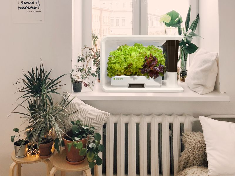 Hydroponic garden on a table in a bedroom