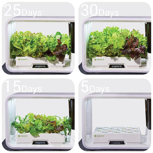 $ white hydroponic grower showing 30 day time lapse of lettuce growth