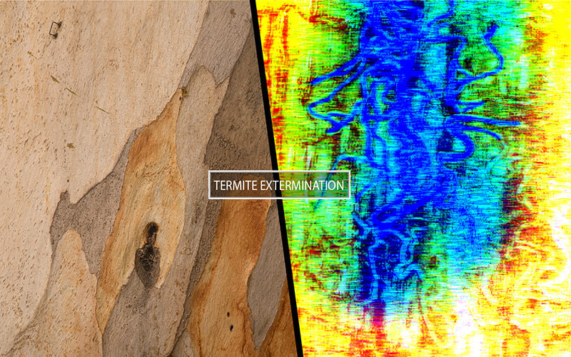 Termite extermination with thermal imager