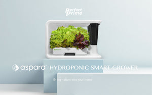 White aspara smart hydroponic grower on light blue stand
