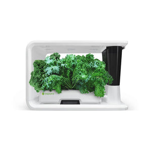 PerfectPrime aspara Nature blue curled kale plants in smart hydroponic grower