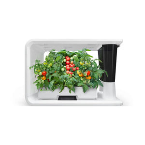 PerfectPrime aspara Nature Cherry Tomatoes plants in smart hydroponic grower