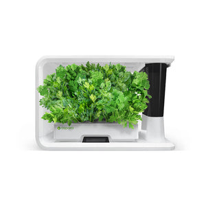 aspara hydroponic grower with Coriander
