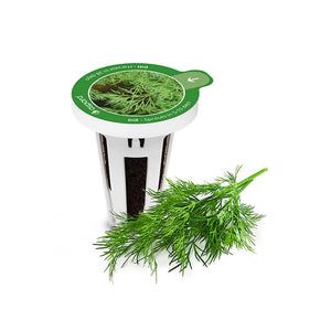 PerfectPrime Dill seed capsules