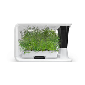 aspara hydroponic grower with Dill
