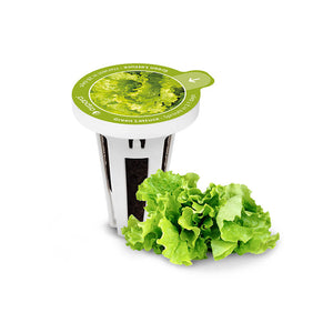 PerfectPrime Green Lettuce seed capsules