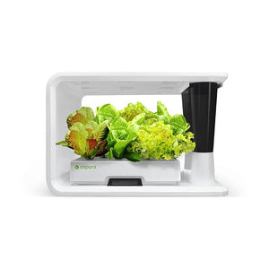 AS9001 Lettuce Selected (8 Capsules) - perfect-prime-technology