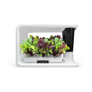 PerfectPrime aspara Nature mixed baby leafs plants in smart hydroponic grower