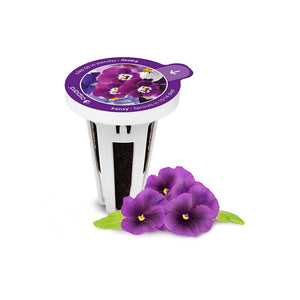PerfectPrime Pansy seed capsules