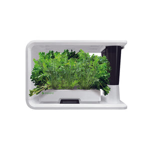 PerfectPrime aspara Nature salad special plants in smart hydroponic grower