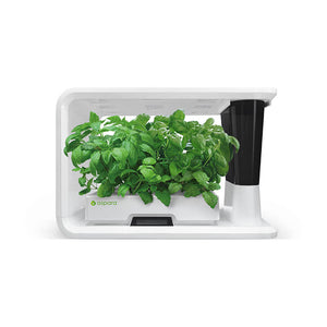 aspara hydroponic grower with Sweet Basil