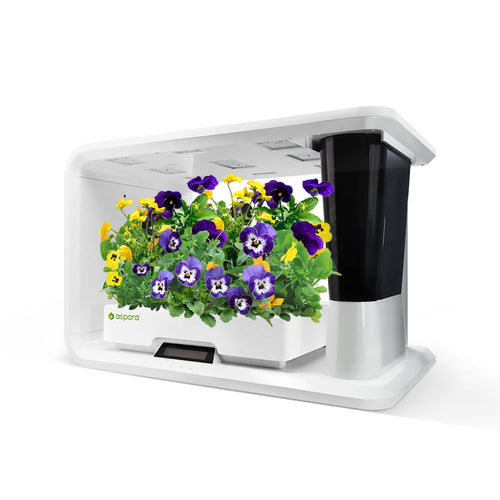 aspara hydroponic grower with pansy