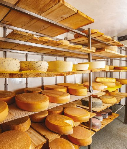 Cheeses on the shelf
