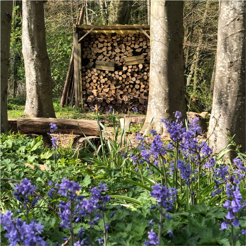 Logs seasoning amongst the bluebells .