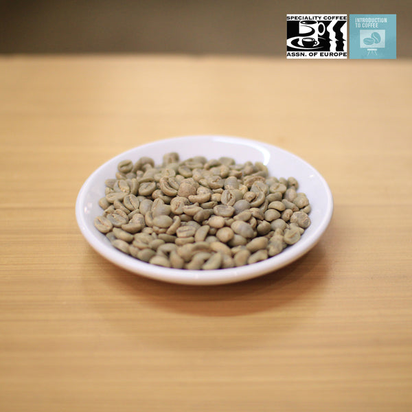 Intro to Coffee (SCAE)