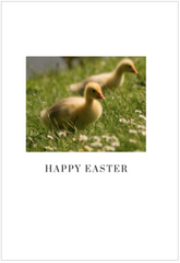 Happy easter ducklings photo