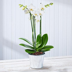 Six things you never knew about orchids postabloom white orchid flower meaning mightylinksfo