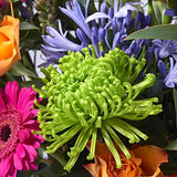 Carnival - Hand-tied Bouquets - Postabloom Flower delivery app