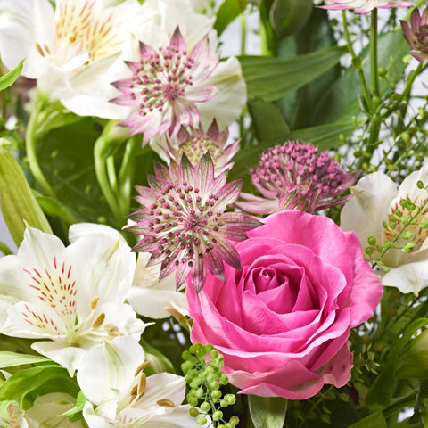 Close ups of Sparkle - letterbox bouquet of flowers - pink roses, white alstroemeria, pink astrantia