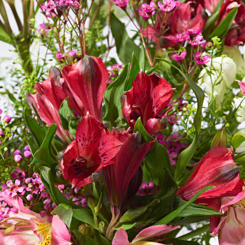 Close ups of Thoughtful - letterbox bouquet of flowers - cerise and pink alstroemeria, white snapdragons, lilac limonium