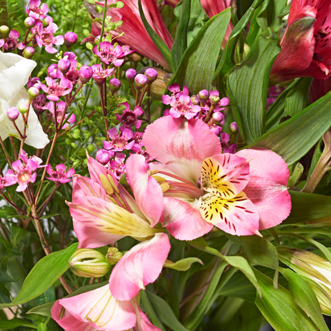 Close up of Thoughtful - letterbox bouquet of flowers - cerise and pink alstroemeria, white snapdragons, lilac limonium