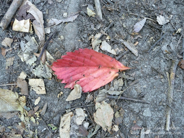 Lisa_Ullrich_Red_Leaf