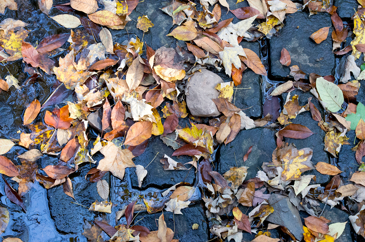 south-mountain-leaves-138072