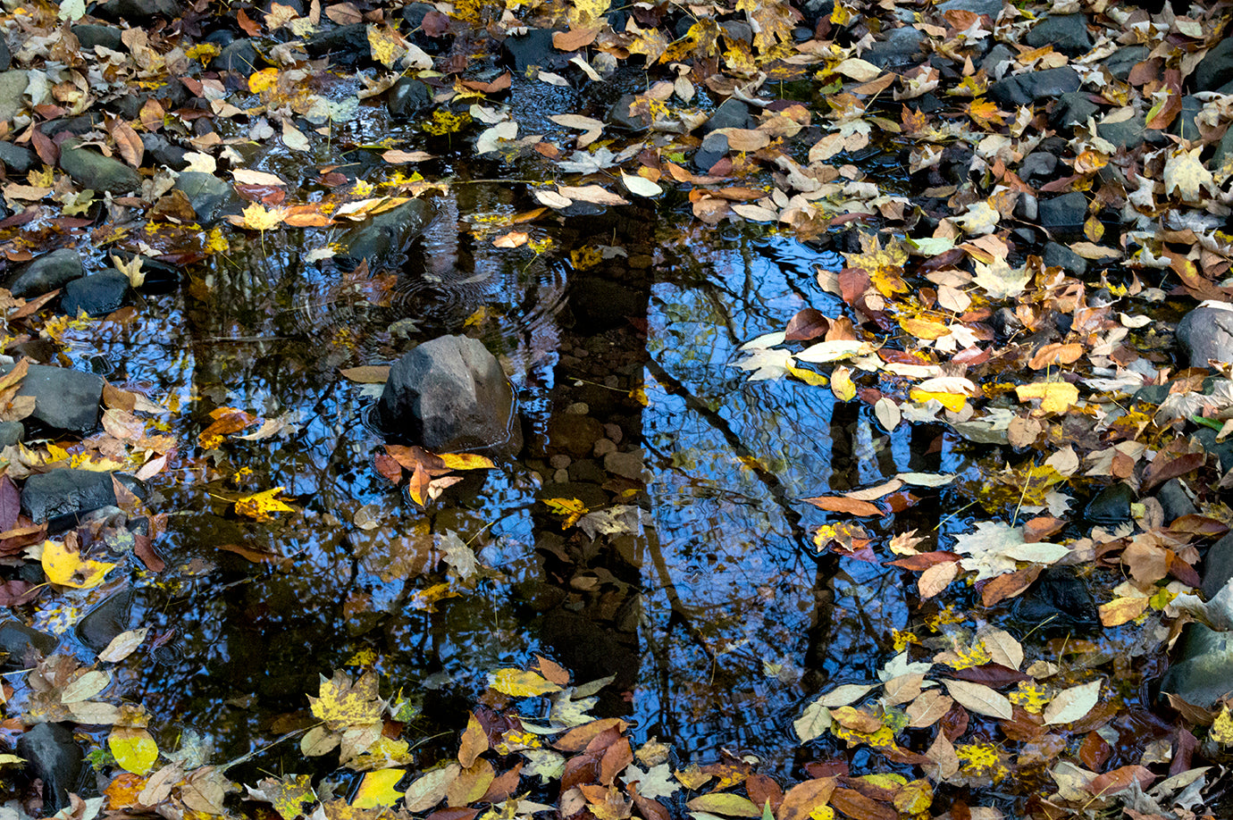 south-mountain-water-leaves-138072