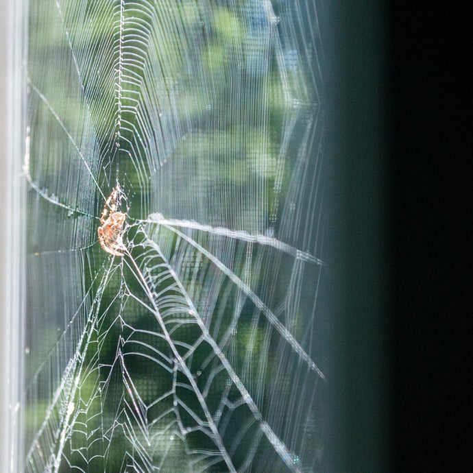 Spider at Home - National Wildlife Federation Photo Contest